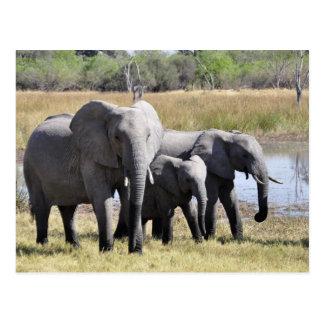 Troupeaux d'éléphant de l'Afrique Carte Postale