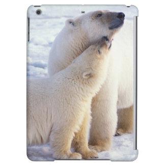Truie d'ours blanc avec l'petit animal, banquise d