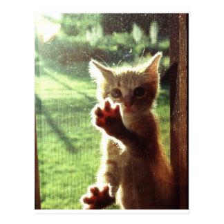 Truman dans la fenêtre de cuisine carte postale