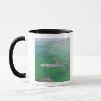 Truncatus de Tursiops de dauphins de Bottlenose) 3 Mug