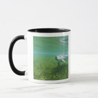 Truncatus de Tursiops de dauphins de Bottlenose) Mug