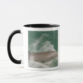 Truncatus de Tursiops de dauphins de Bottlenose) Mugs
