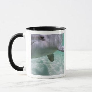Truncatus de Tursiops de dauphins de Bottlenose) Tasses