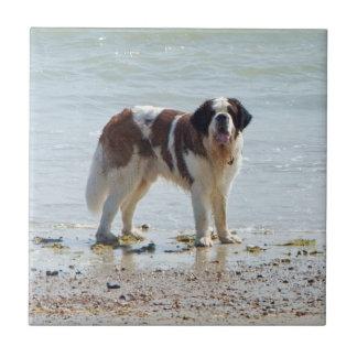 Tuile de chien de St Bernard belle ou trépied, cad Carreaux En Céramique