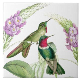 Tuile des colibris de Goulds Carreau