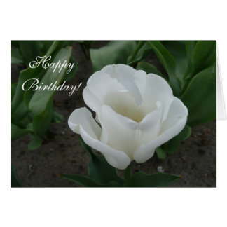 tulipe blanche carte de vœux
