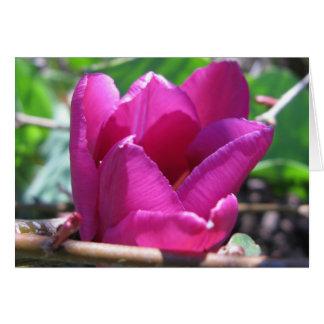 Tulipe dans le bois cartes