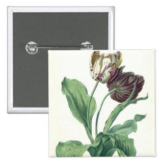 """Tulipe de jardin, de """"opéra Botanica"""", gravé par L Badge"""