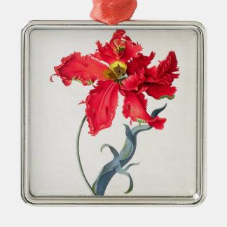 Tulipe : Fard à joues de Perroquet Ornement Carré Argenté