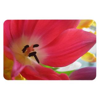 Tulipe Magnets Rectangulaire