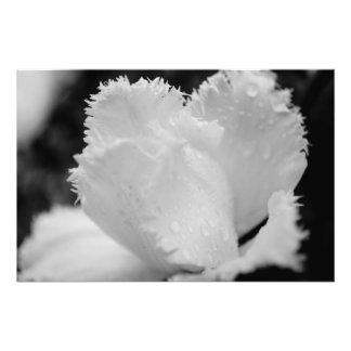 Tulipe noire et blanche photographie d'art