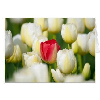 Tulipe rouge dans un domaine des tulipes blanches carte de vœux