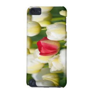 Tulipe rouge dans un domaine des tulipes blanches coque iPod touch 5G