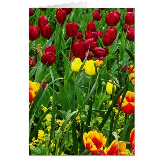 Tulipes de Canberra Cartes De Vœux