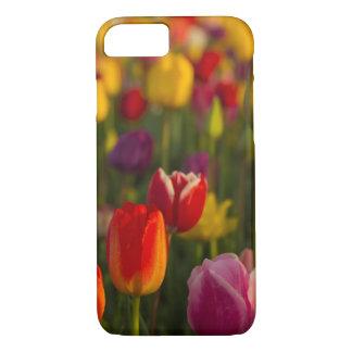 Tulipes, festival de tulipe, Woodburn, Orégon, Coque iPhone 7
