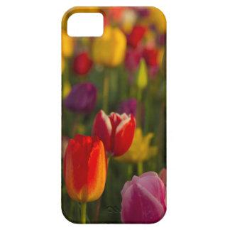 Tulipes, festival de tulipe, Woodburn, Orégon, iPhone 5 Case