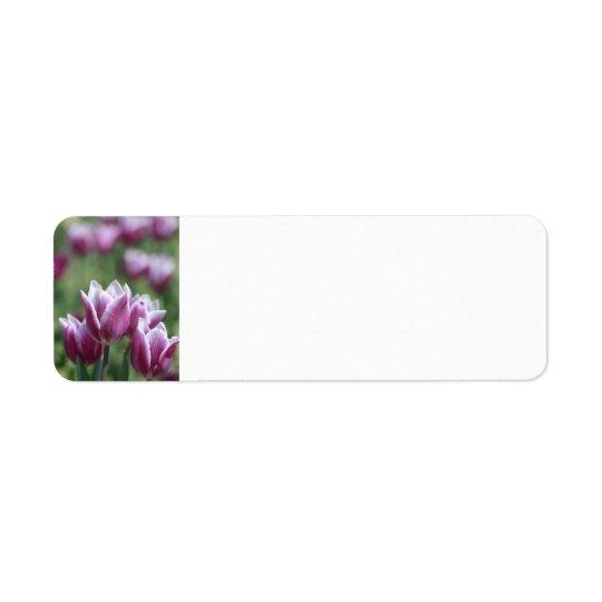 Tulipes pourpres, étiquettes de adresse de ressort