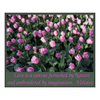 Tulipes roses et lilas sensibles posters