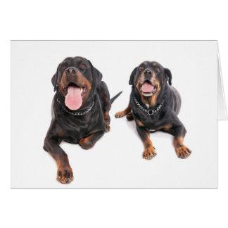 two rottweilers, cartes de vœux