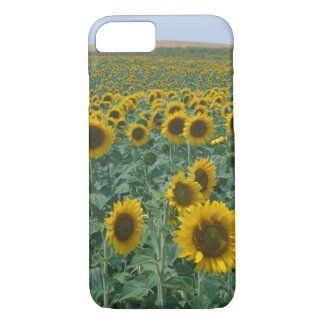 UE, France, Provence, gisement de tournesol Coque iPhone 8/7