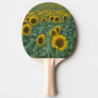 UE, France, Provence, gisement de tournesol Raquette De Ping Pong