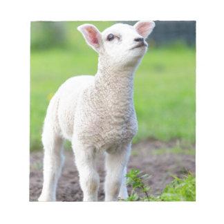 Un agneau nouveau-né blanc se tenant dans l'herbe bloc-note