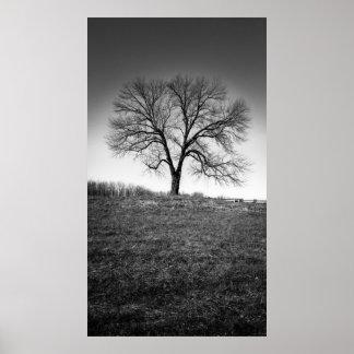 Un arbre posters