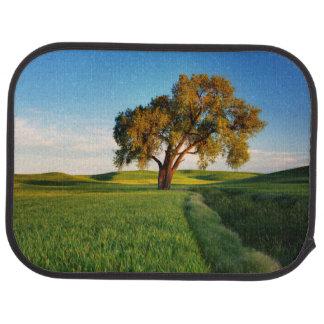 Un arbre solitaire entouré par Rolling Hills de Tapis De Sol