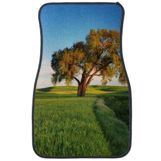 Un arbre solitaire entouré par Rolling Hills de Tapis De Voiture