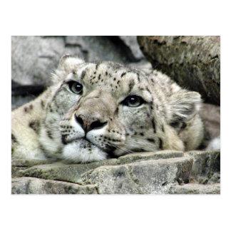 Un autre léopard de neige de lundi carte postale