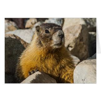Un autre portrait de Marmot Carte De Vœux
