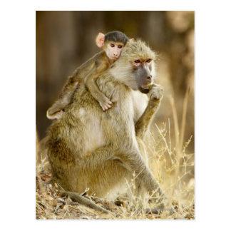 Un babouin jaune infantile (Papio Cartes Postales