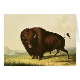 Un bison, c.1832 carte de vœux