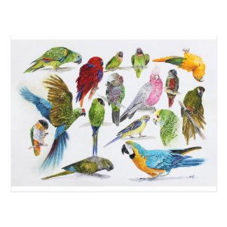 Un bon nombr'et un bon nombre de perroquets sur carte postale