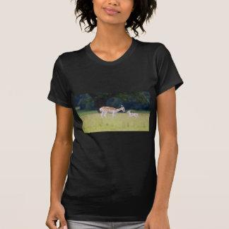 Un cerf commun affriché (daine) avec le faon t-shirt
