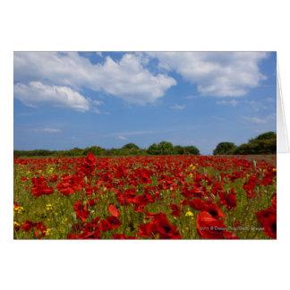 Un champ complètement des fleurs rouges cartes