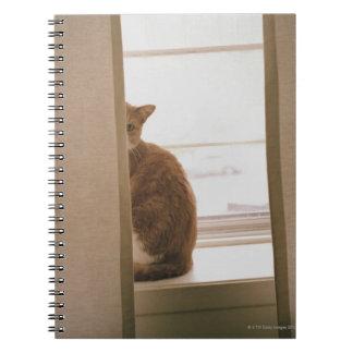 Un chat se reposant derrière les rideaux sur une carnet