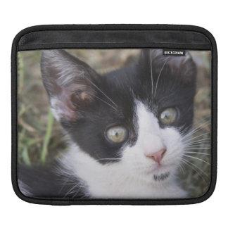 Un chaton noir et blanc de chat dans le jardin poches pour iPad