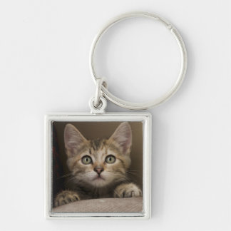 Un chaton tigré très doux porte-clé carré argenté