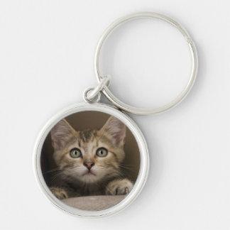 Un chaton tigré très doux porte-clé rond argenté
