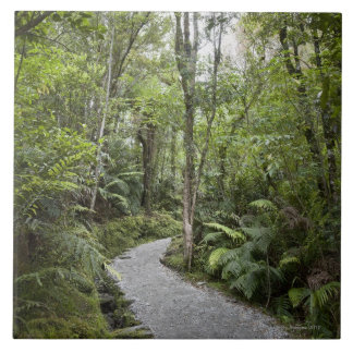 Un chemin à travers une forêt tropicale à la base grand carreau carré