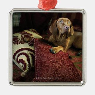Un chien se trouvant sur des oreillers ornement carré argenté