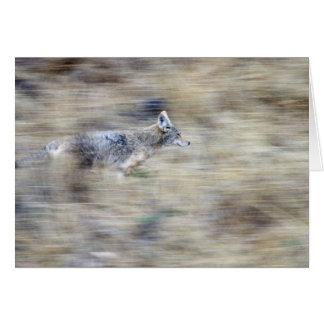 Un coyote fonctionne par le flanc de coteau se carte de vœux