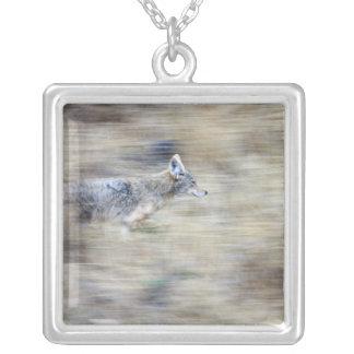 Un coyote fonctionne par le flanc de coteau se pendentif carré
