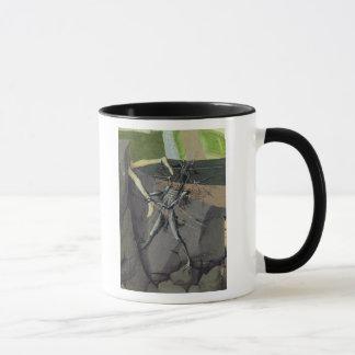 Un démon, du 'couronnement du Virgin Mug