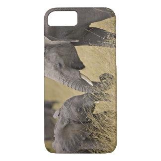 Un éléphant africain frôlant dans les domaines du coque iPhone 7