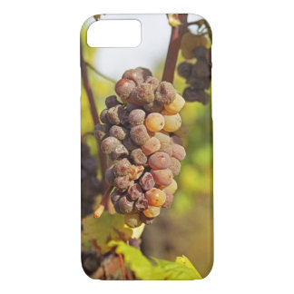 Un groupe moisi de raisin de Semillon à ch Raymond Coque iPhone 7