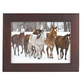 Un hiver pittoresque des chevaux courants sur les boîtes à souvenirs