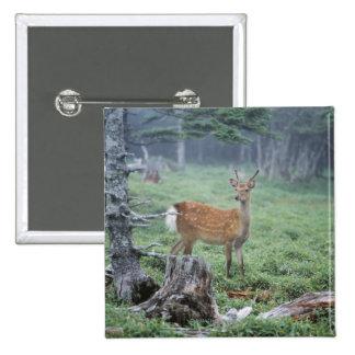 Un jeune cerf commun dans une clairière de forêt pin's