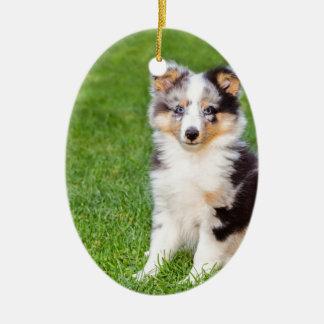 Un jeune chien de sheltie se reposant sur l'herbe ornement ovale en céramique